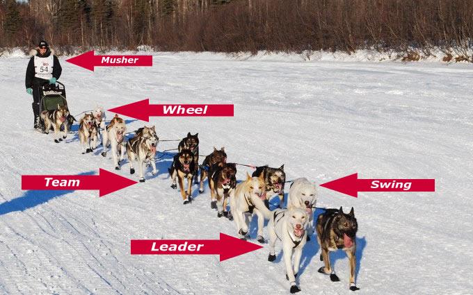Mushing 101 – Kaiser Racing Kennel – Bethel, Alaska