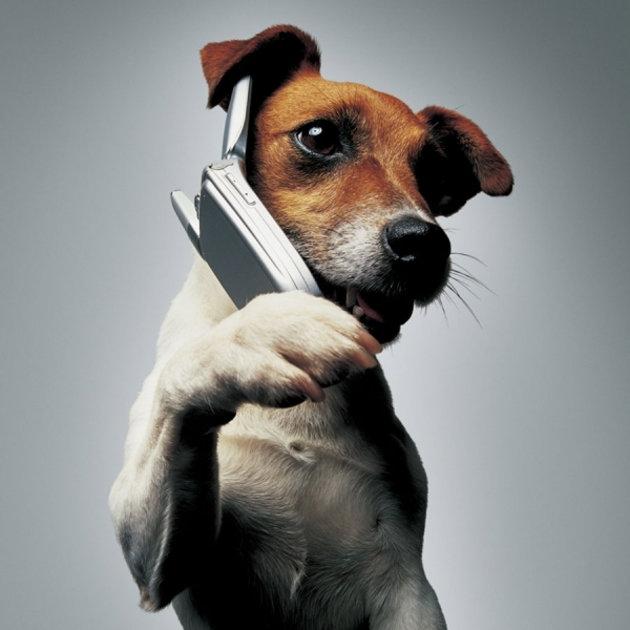 jack-phone